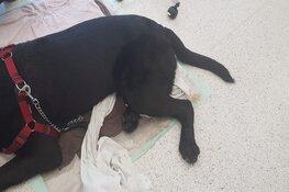 """Oververhitte hond Aalsmeer redt het niet: """"Heel sneu"""""""