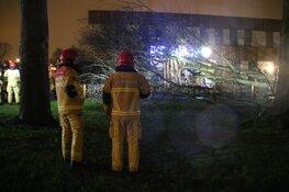 Boom tegen school in Aalsmeer