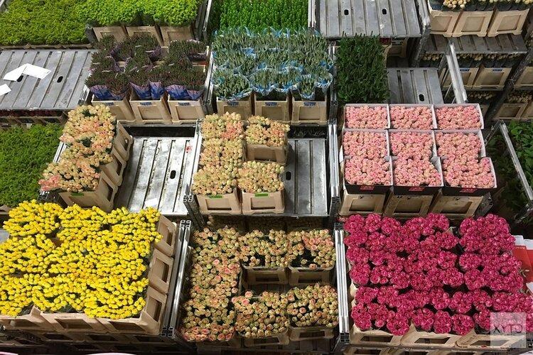 FloraHolland waarschuwt voor loopgravenoorlog in sierteeltsector